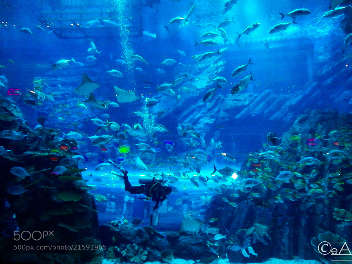 Photograph Dubai Aquarium by Ershad Ashraf on 500px