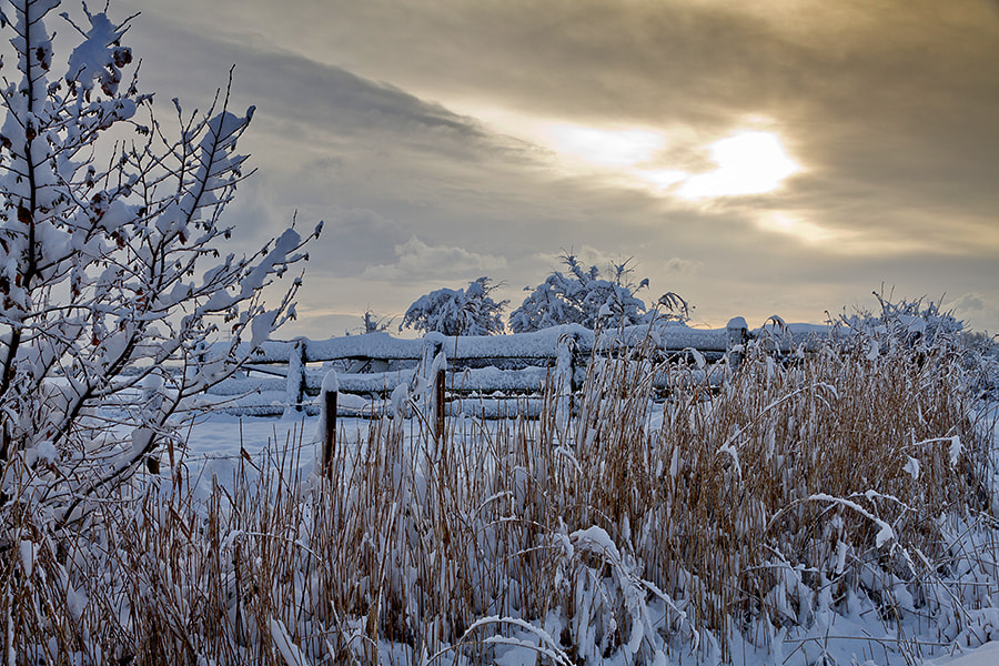 Photograph Winter fence by Deen Guldemond on 500px