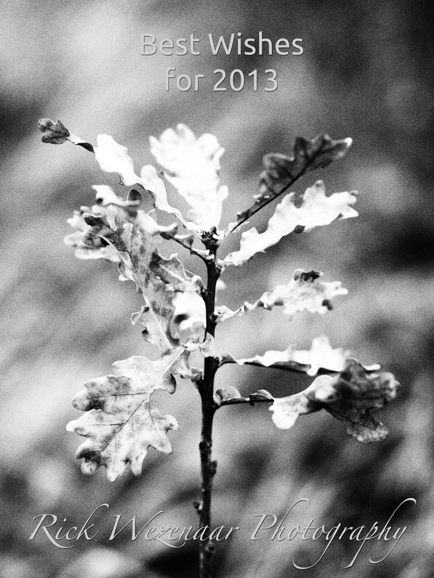 Photograph Best Wishes for 2013 by Rick Wezenaar on 500px