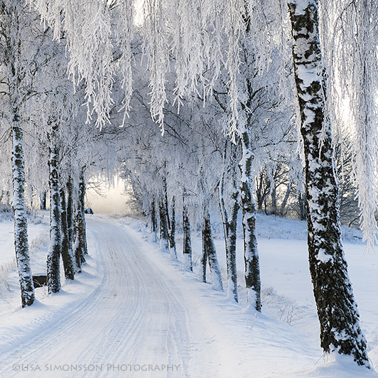 Photograph Frosty trees! by Lisa Simonsson Photography on 500px