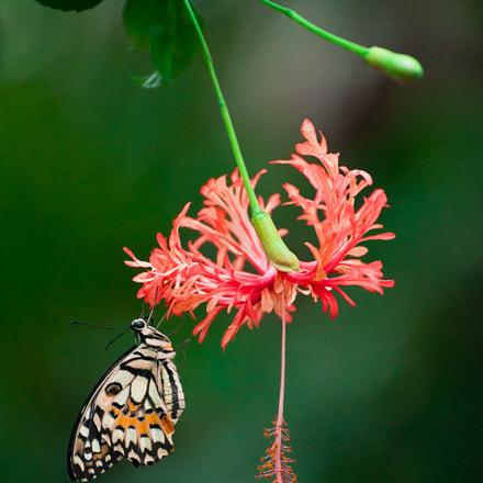 A Schmetterlinghaus inhabitant