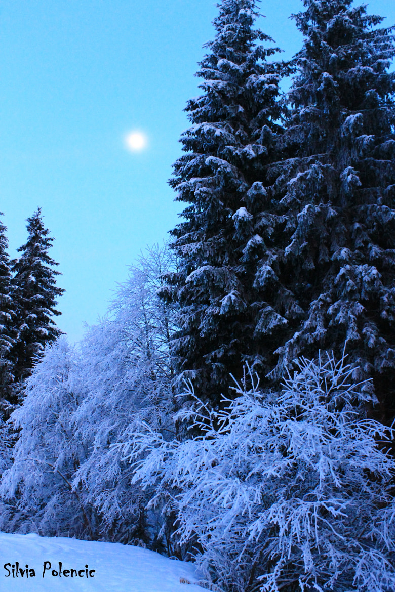 Photograph A frosty landscape illuminated by the moon  by Silvia Polencic on 500px