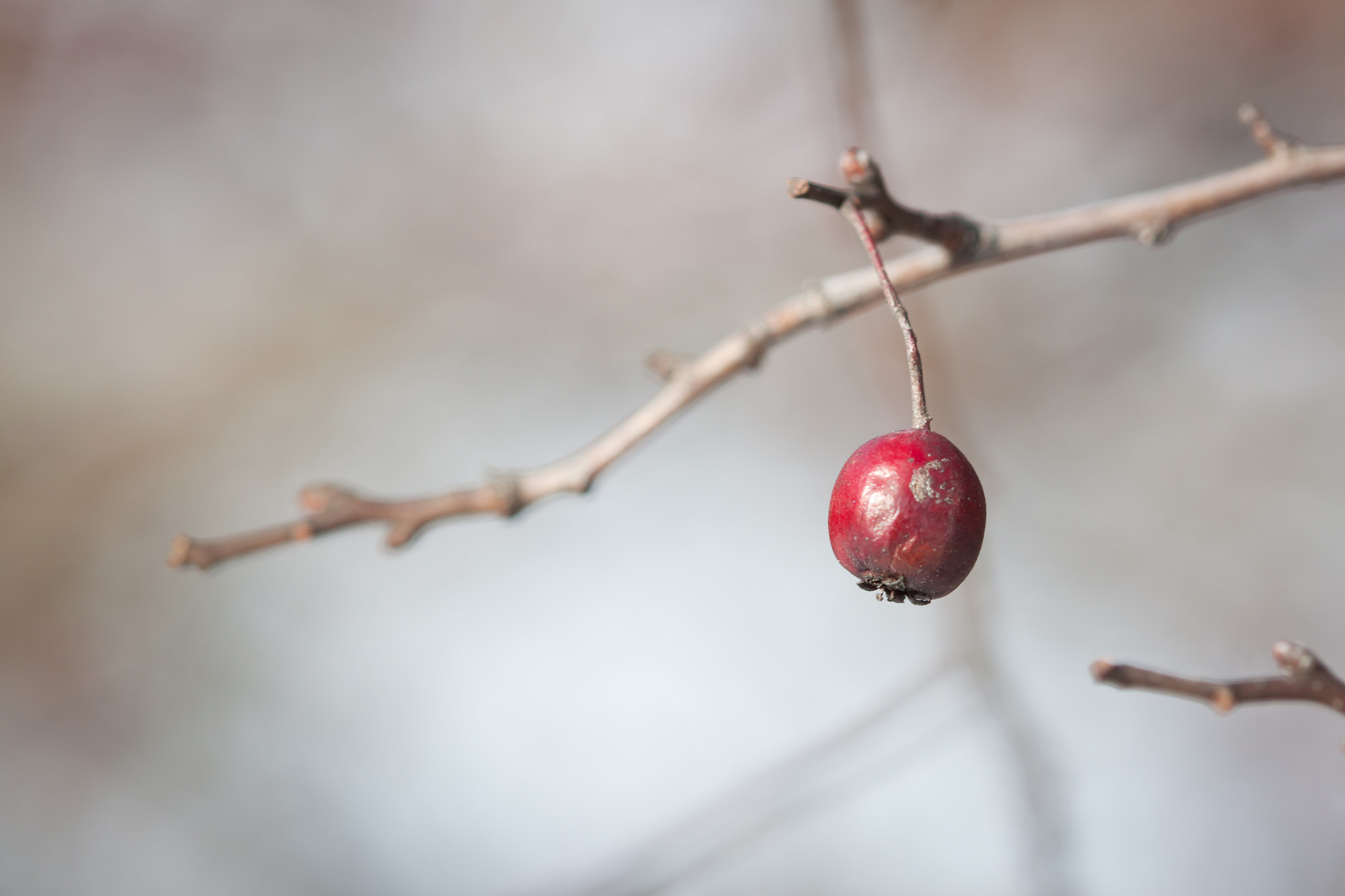 Photograph berry by Anastasia Fedorova on 500px