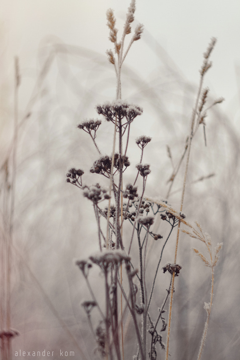 Photograph frost by alexander kom on 500px