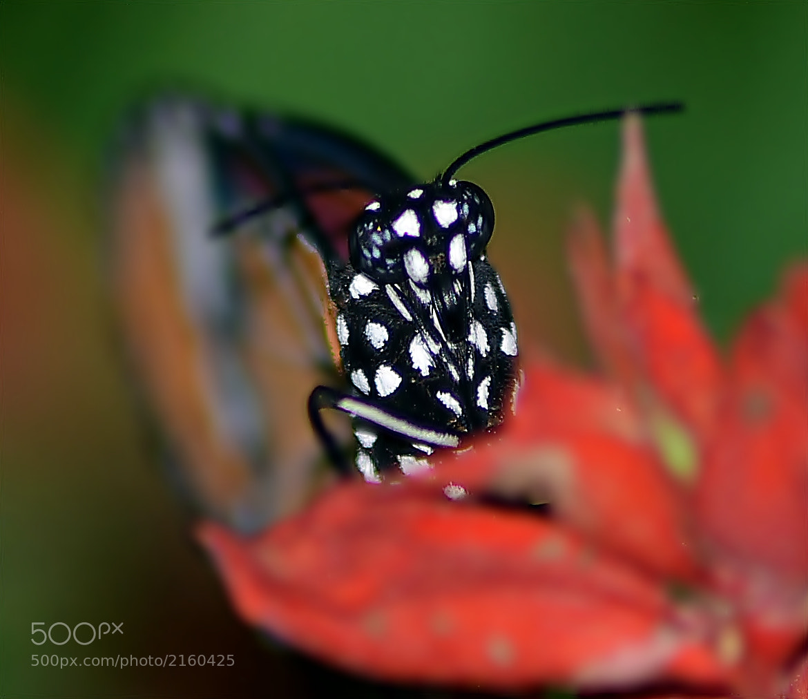 Photograph Eyes of Butterfly by Hany Todros on 500px