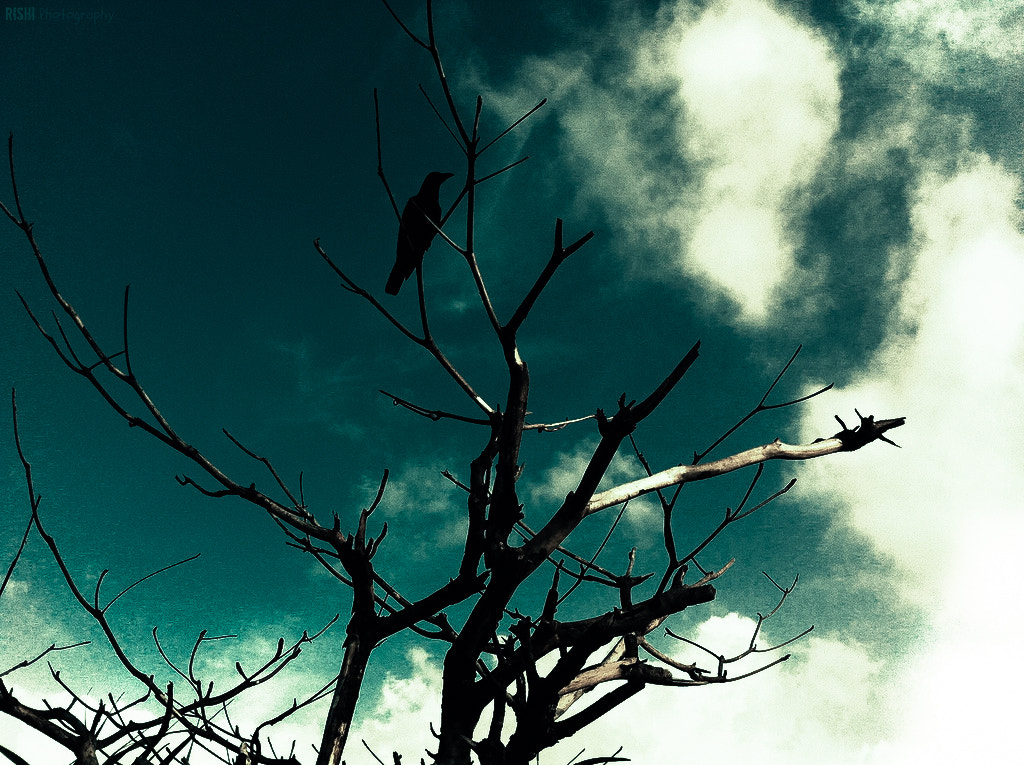 Photograph Lonely Crow by Rishikeshan Pangushan on 500px