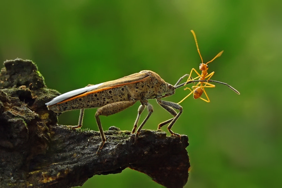Photograph friendship by teguh santosa on 500px