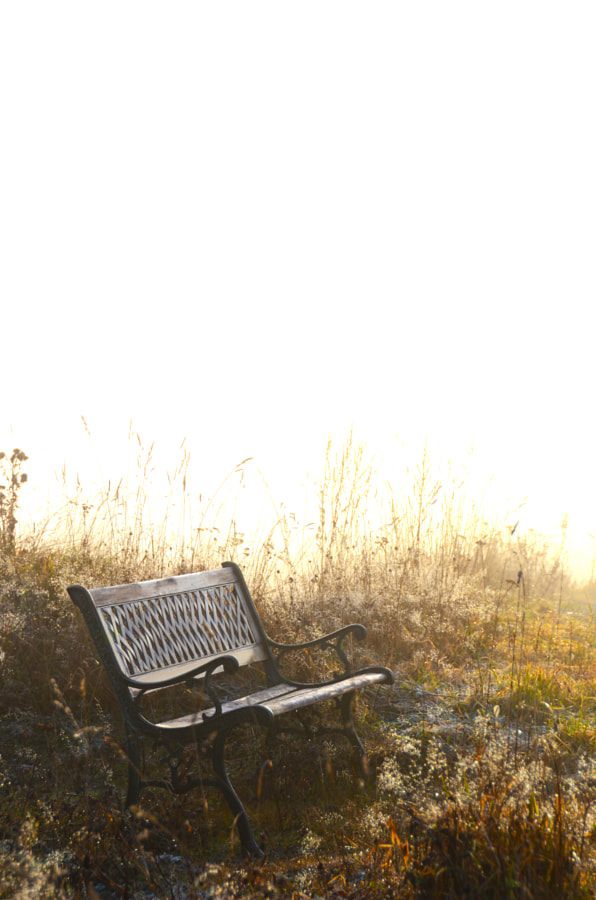 Frosty bench in cold morning sunshine.