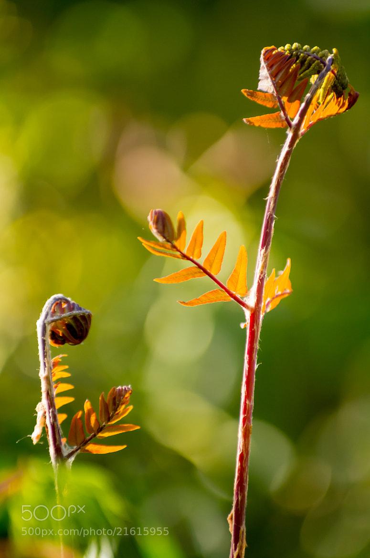 Photograph Ferns unfurl by John C. on 500px