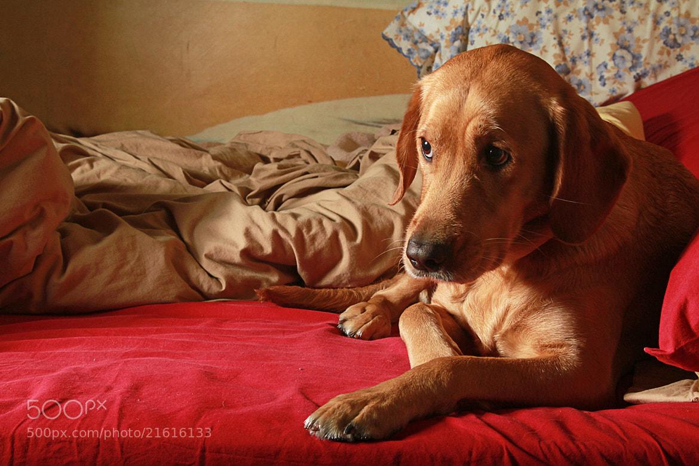 Photograph Sweet Dog by Francesco Elias on 500px