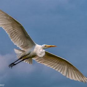 Wings Wide by Harold Begun (HaroldBegun)) on 500px.com