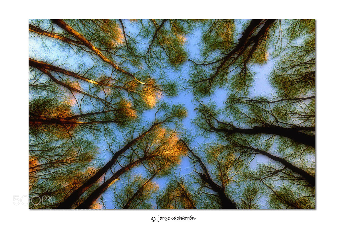 Photograph Mirando al cielo by Jorge Cacharrón on 500px