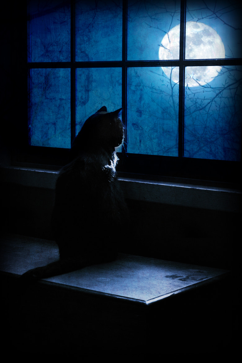Photograph The Black Cat's Moon by Megan Noble on 500px