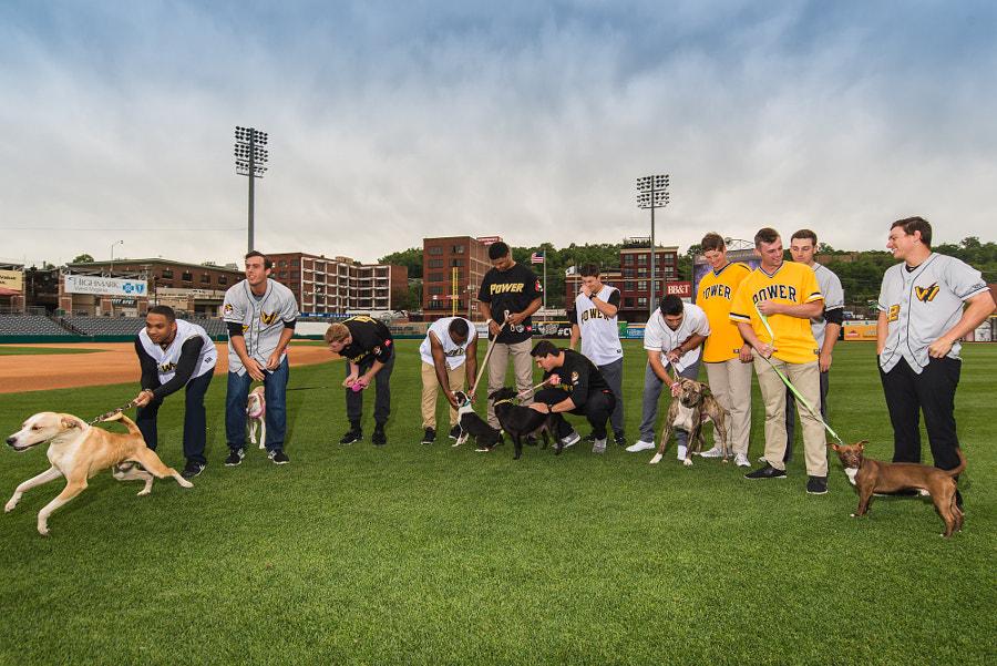 Puppies and Baseball