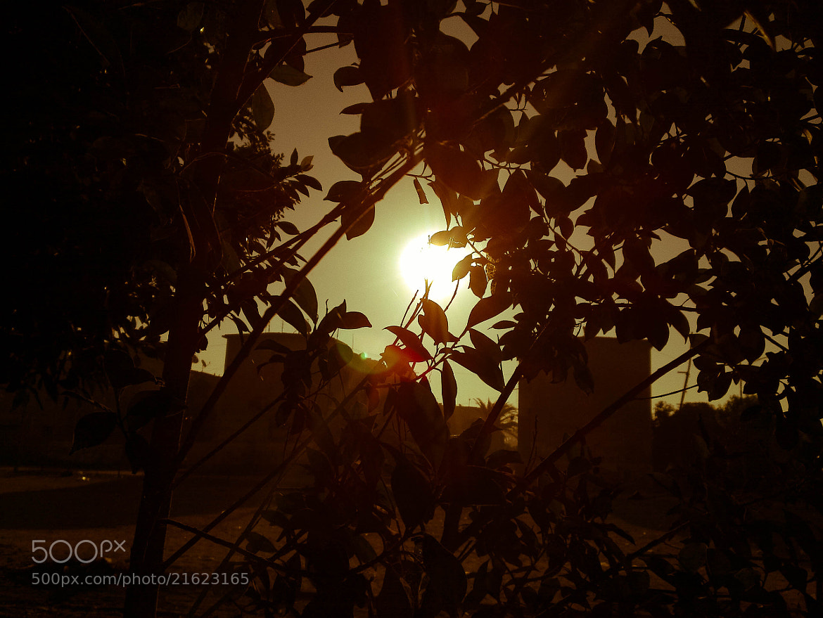 Photograph Sun Down by Mohamed Aos on 500px
