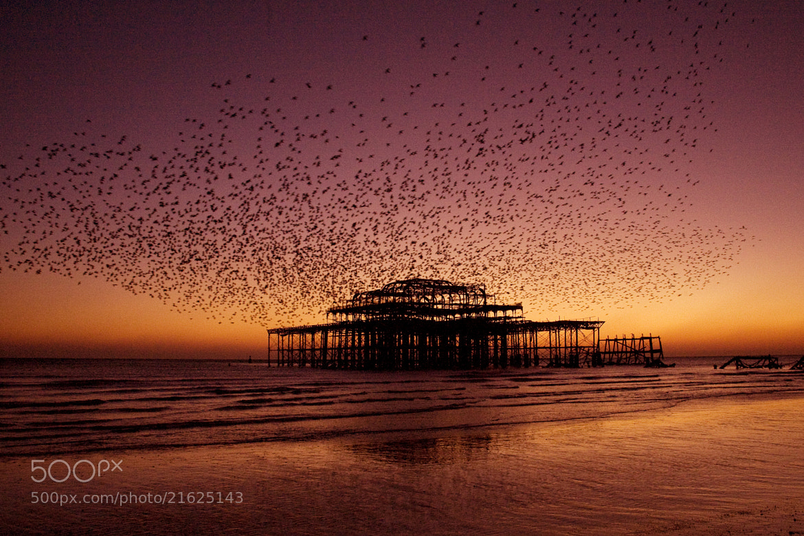 Photograph West Pier Brighton 1 by Alan Humphries on 500px
