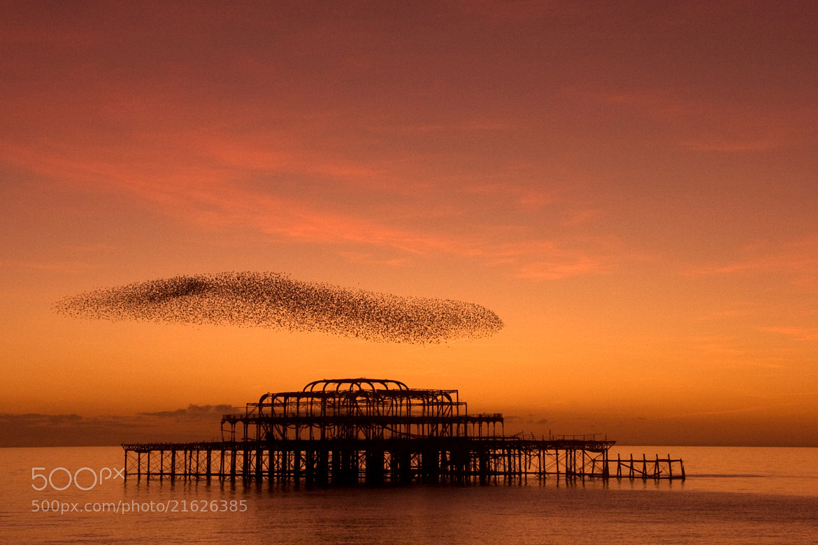 Photograph West Pier Brighton by Alan Humphries on 500px