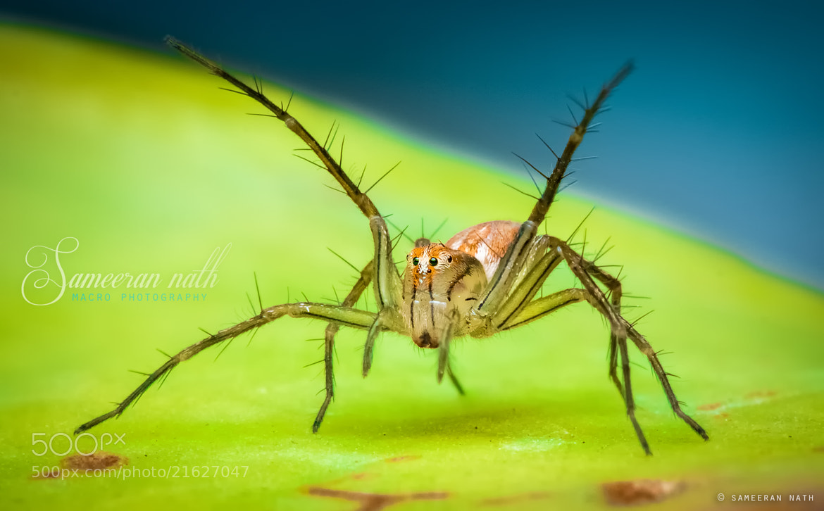 Photograph The Fighter  by Sameeran Nath on 500px