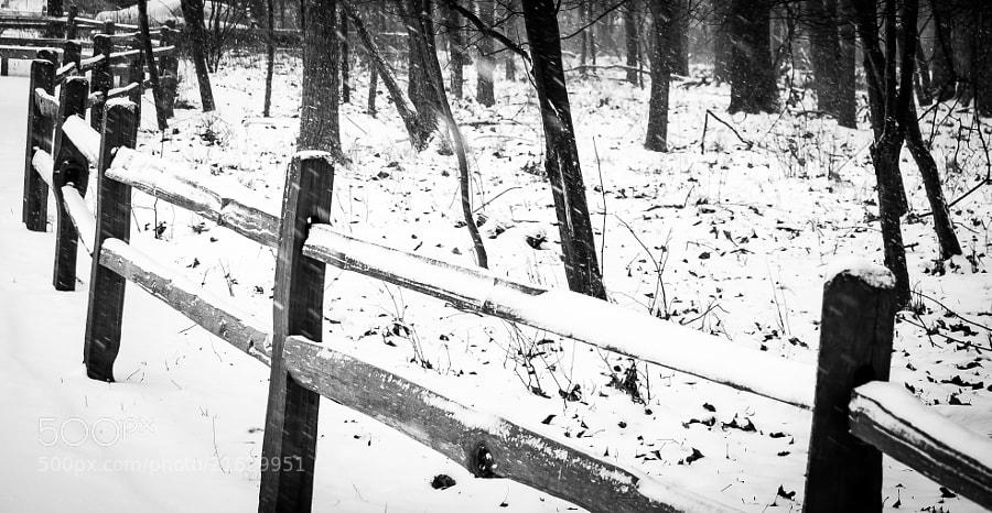 Snowy woods in Troy.