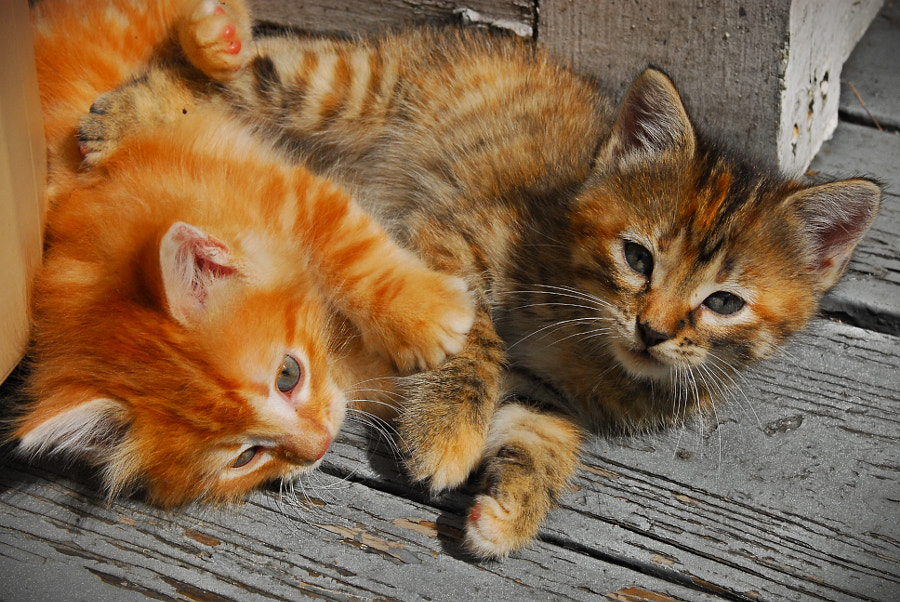 Kittens playing in the Sun
