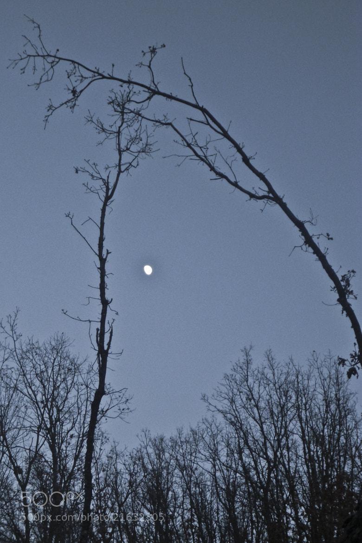 Photograph Moon romance by Ramiro Diaz Lopez on 500px