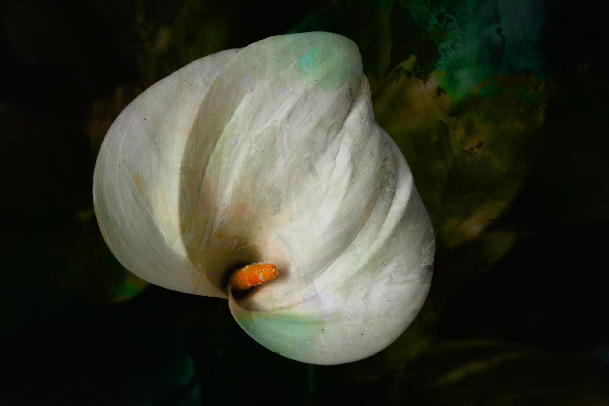 Photograph The calla by Duilio Pianelli on 500px