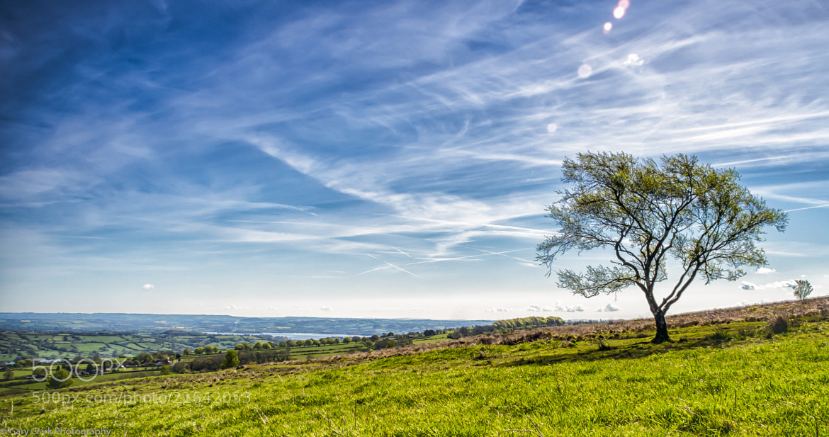 Photograph Mendip Hills - Lone Tree by Gary Clark on 500px