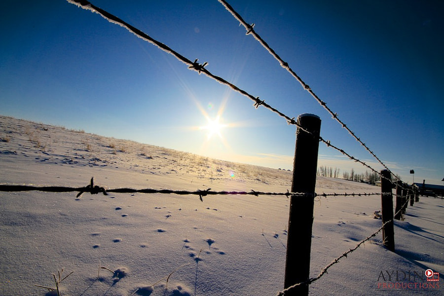 Barbedwire fence