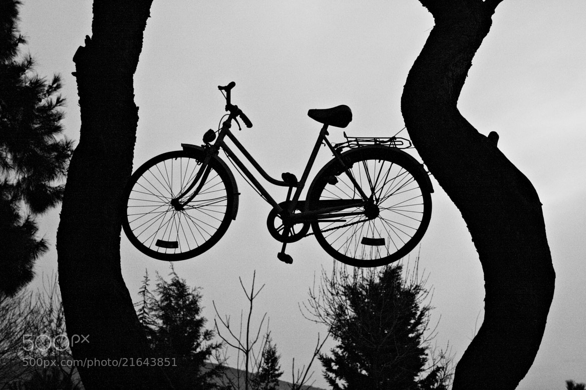 Photograph İn the tree that the bicycle by Sibel Sedefoğlu on 500px