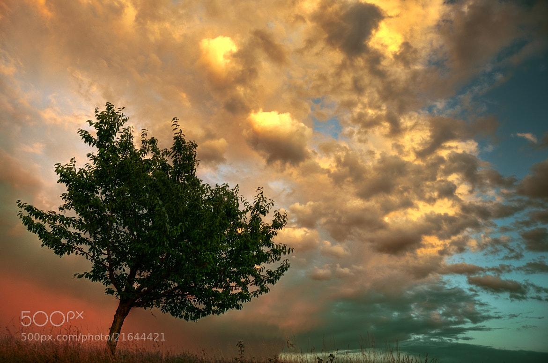 Photograph Baum Himmel Wolken - tree sky clouds by Felix Ott on 500px
