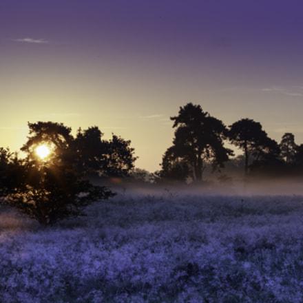 Thetford Sunrise