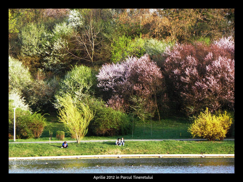 Photograph Aprilie in Parcul Tineretului - 2012 by Victor Modoran on 500px