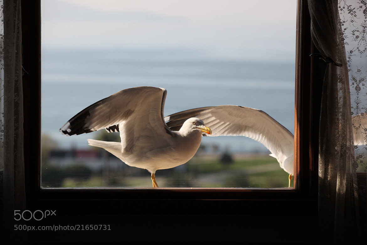 Photograph window side by Adem Meleke on 500px