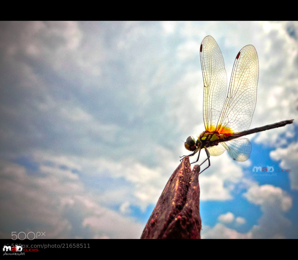Photograph Untitled by Athul Mk on 500px