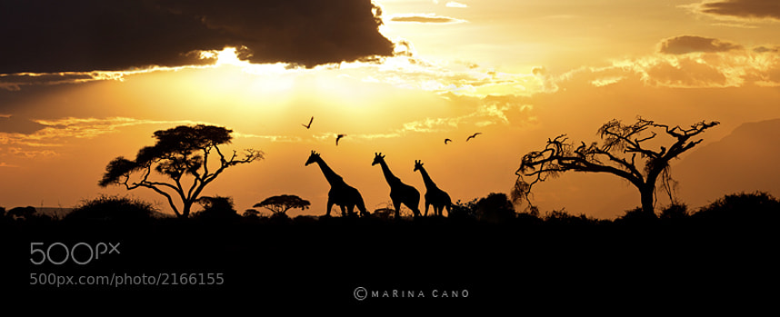 Photograph Kenya by Marina Cano on 500px