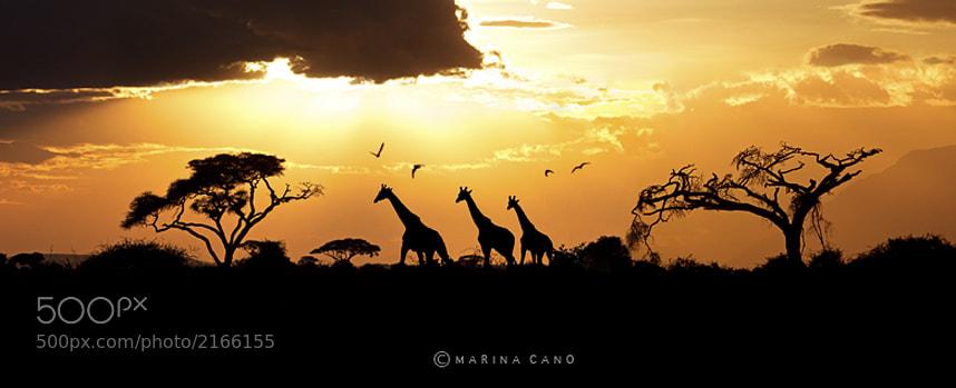 Photograph Kenya by Marina Cano on 500px