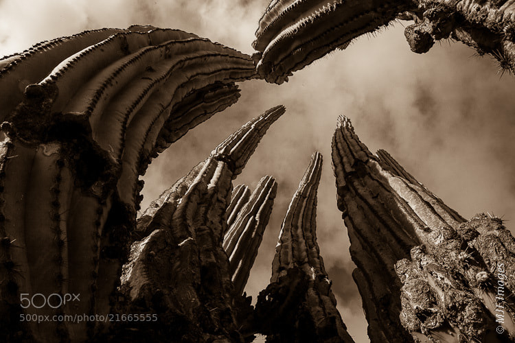 Photograph Saguaro Towers by Michael Flaherty on 500px