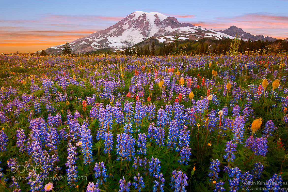 Photograph Wildflowers at Rainier by Nitin Kansal on 500px