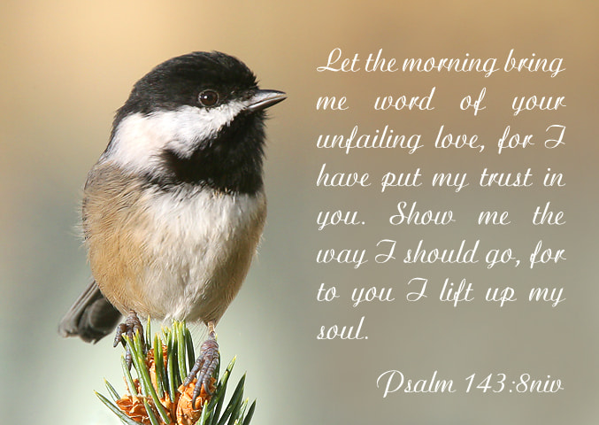 Photograph Psalm 143:8 by Janine Russell on 500px