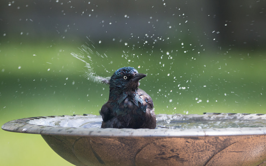 Bath time by aishwaryaisonline on 500px.com
