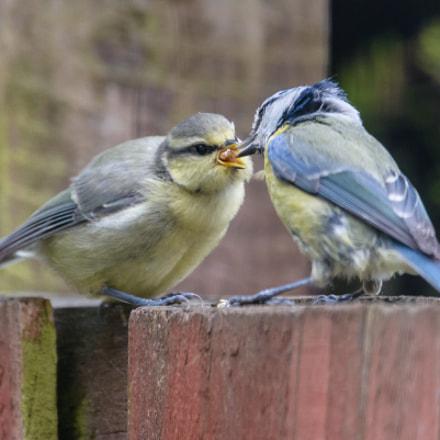 feeding time...