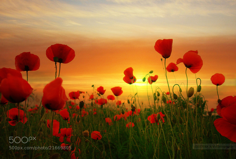 Photograph warm flowers by Senna Ayd on 500px