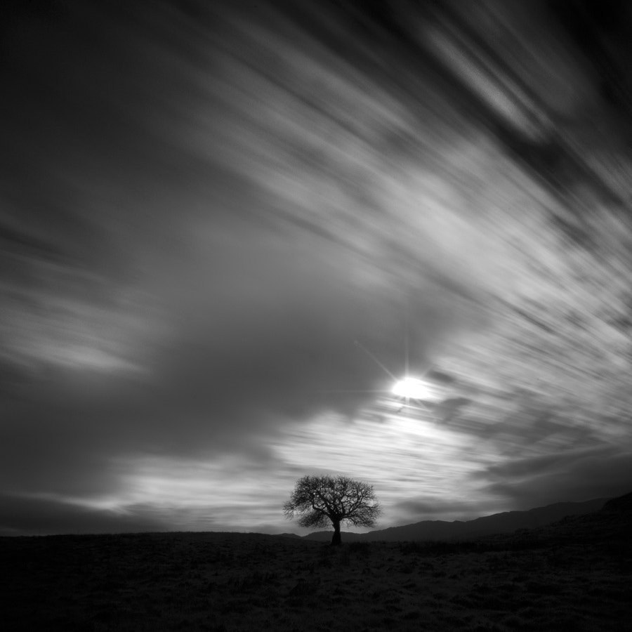 Photograph a poet's tree by Nathan Wirth on 500px