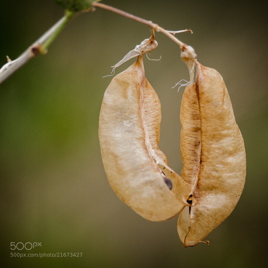 Photograph .: Pods :. by Jon Rista on 500px
