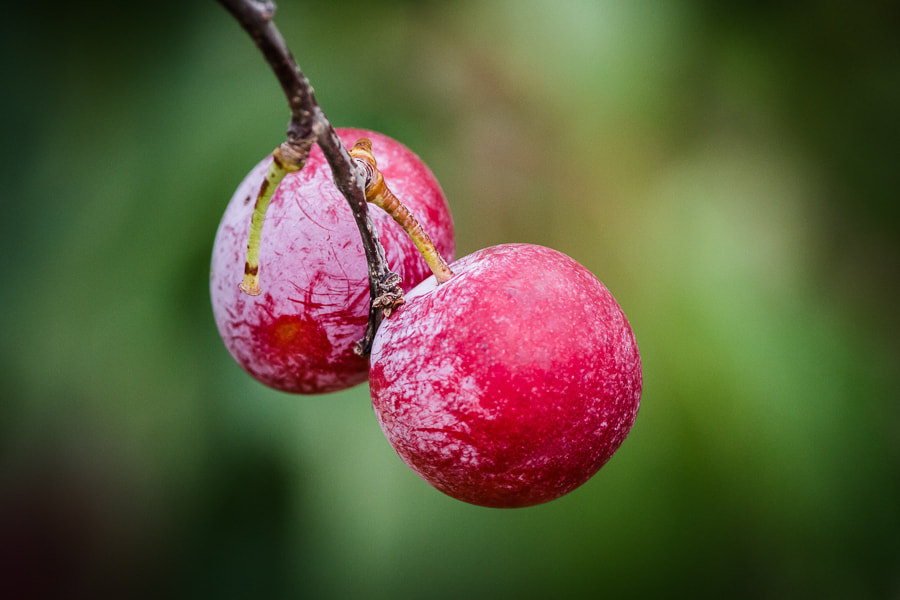 Photograph .: Cherries :. by Jon Rista on 500px