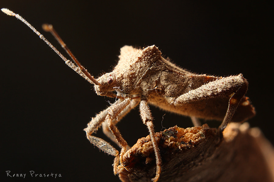 Photograph Dirty Bug 2 :) by Ronny Indah on 500px