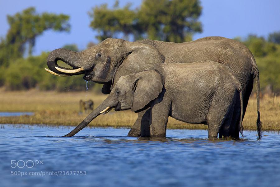 Photograph Chobe Giants by Mario Moreno on 500px