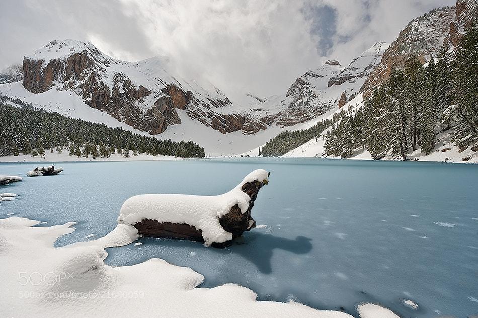Photograph The seal by David Martín Castán on 500px