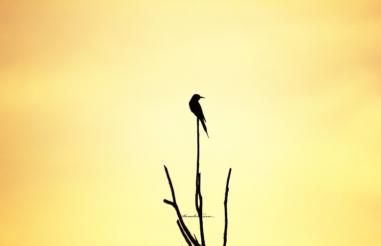 Photograph SOLITUDE by Sandesh nk on 500px