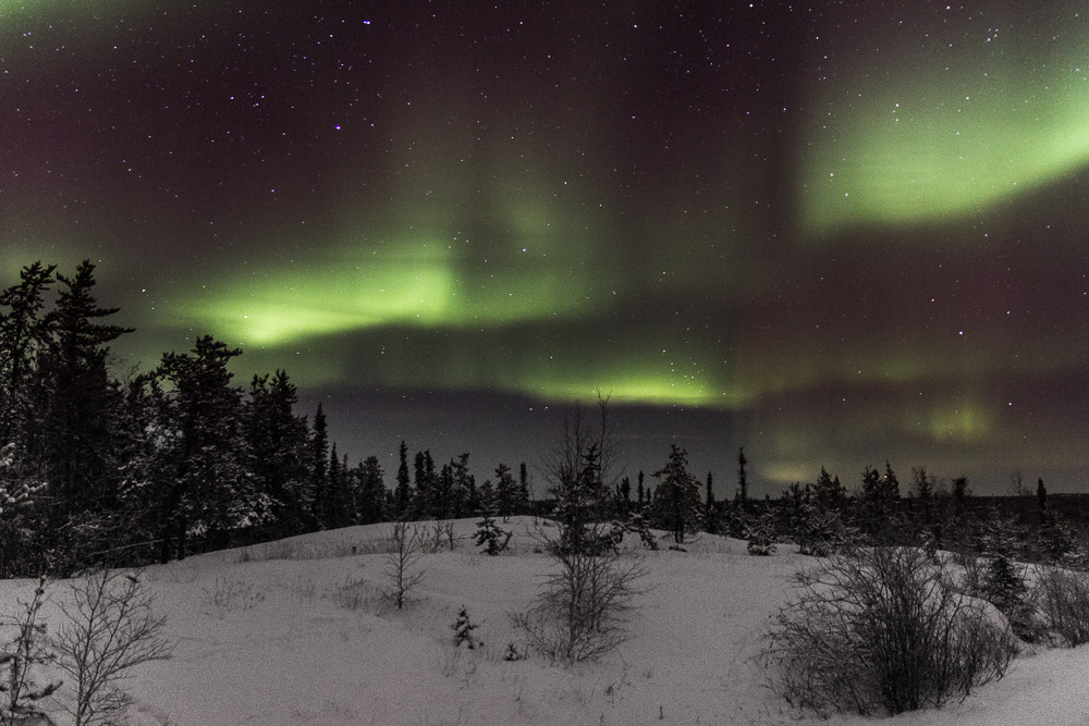 Photograph Grainy Aurora by Ian Wills on 500px